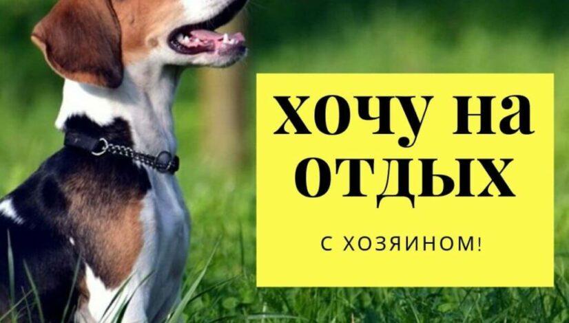 С собакой БАЗА ИВОЛГА