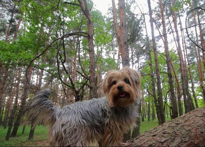 С собакой БАЗА ИВОЛГА (3)